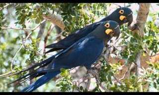 איש הקומנדו של הציפורים - סיפור מדהים
