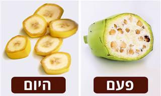 איך נראו הפירות והירקות שאנו אוכלים לפני שבייתנו אותם?