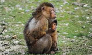 יומנו של קוף