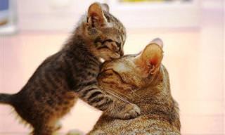 אוסף נשיקות מתוקות שיחממו לך את הלב...