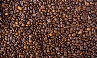 ההיסטוריה של פולי הקפה