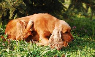 7 תרופות ביתיות שיעזרו לכלב שלכם להפסיק להתגרד
