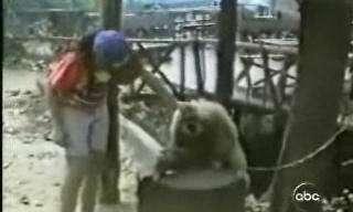 גם קופים אוהבים ליטופים