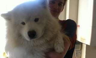 כלבים ענקיים שהיו רוצים להיות קטנים!