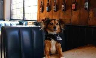 בדיחה על כלב ובעליו שנכנסו לבר וביקשו כוס משקה - לשניהם...