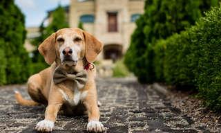 תוכנית 30 הימים לאימוץ כלב