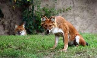 20 מיני בעלי חיים לא מוכרים מרחבי העולם