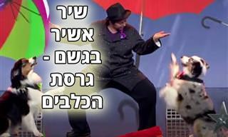 """מופע של כלבים מבצעים ריקוד חינני ל""""שיר אשיר בגשם"""""""
