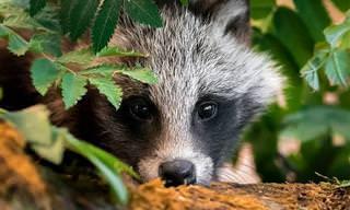 סדרת תמונות מדהימה של יערות פינלנד והחיות החמודות שגרות בהם