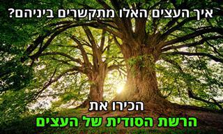 המחקר הישראלי המפתיע הזה ישנה את כל מה שחשבתם על עצים