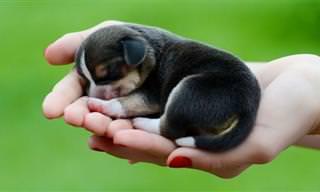 17 חיות קטנטנות שנכנסות בכף היד
