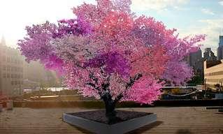 העץ שמניב 40 סוגי פירות שונים