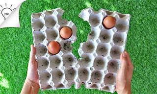 8 דברים שימושיים שאפשר לעשות עם קרטוני ביצים ריקים