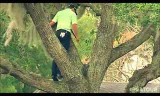 שחקן גולף מטפס על עץ כדי לחבוט בכדור