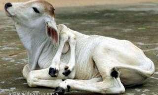 חיות שנולדו עם פגמים גנטיים