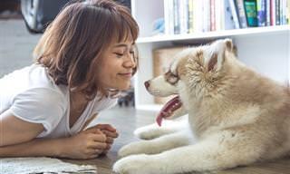 9 בעיות התנהגות שכיחות של כלבים והדרכים הנכונות לטפל בהן
