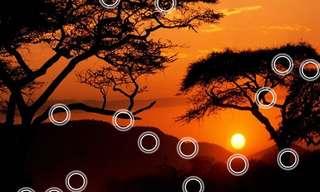טיול לילי בסוואנה של אפריקה