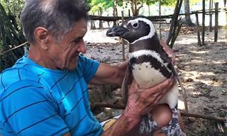 סיפורו של הפינגווין הנאמן - דג'ינדג'ים