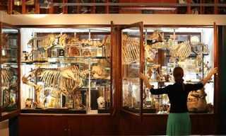 סיור במוזיאון לזואולוגיה בלונדון