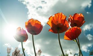 12 צמחים ופרחים יפיפים שמתאימים לגידול בקיץ