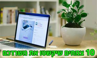 10 צמחים שאפשר לגדל במשרד