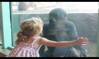 ילדה מתיידדת עם קוף בגן החיות