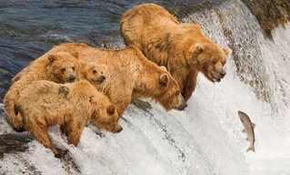 תמונות של בעלי חיים ברגע הנכון!