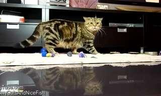 לקט פספוסים של חתלתולים