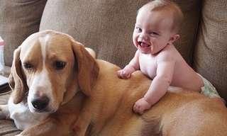אוסף סרטונים חמוד ומצחיק של תינוקות וחיות מחמד