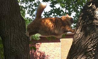 19 תמונות מצחיקות של חתולים מבולבלים
