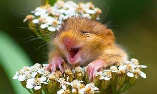 עכברים יכולים להיות גם חמודים