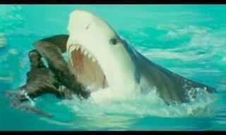 8 סרטונים באיכות גבוהה של חיות בר בסביבה הטבעית שלהן