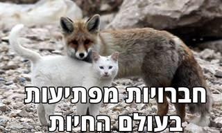 17 תמונות מקסימות של חברויות מפתיעות בעולם החיות