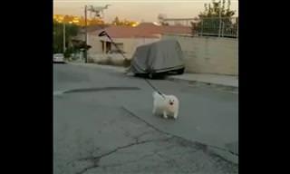 הדרך הכי מצחיקה ויצירתית לצאת עם הכלב לטיול בזמן משבר הקורונה