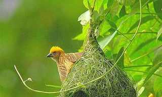 קנים של ציפורים - יופי טבעי!