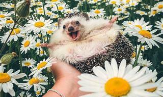 16 בעלי חיים חמודים להפליא שישכיחו מכם את כל הצרות שלכם