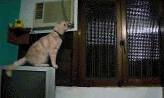 חיות הבית המצחיקות ביותר באינטרנט