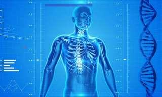 גוף האדם במספרים - עובדות מרתקות!