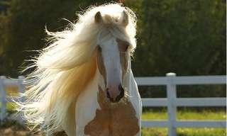 סוסים עם רעמות שיער מרשימות במיוחד