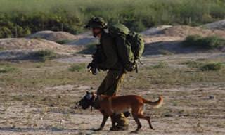 """גלו את הסיפור הייחודי מאחורי הקמת יחידת הכלבים של צה""""ל"""