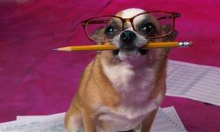 מילון לכלבים: ההבדלים בין מה שאתם והכלב רואים