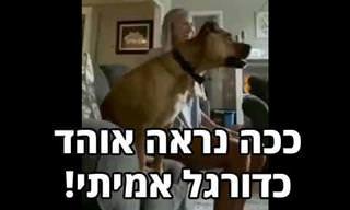 סרטון מצחיק של כלב מתלהב מגול במשחק כדורגל