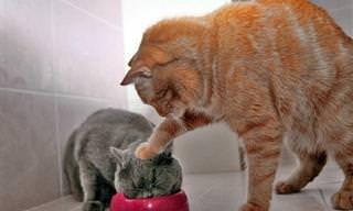 20 חתולים שנתפסו בעדשת המצלמה ברגעים הכי שובבים ומתוקים