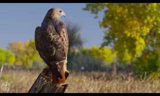 עופות דורסים מרהיבים ביופיים