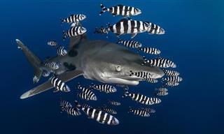 צילומים מתחת למים של גרג לקואור