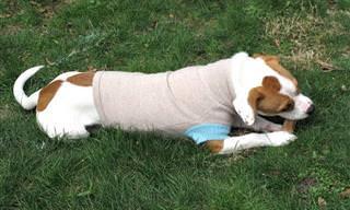 מדריך להכנת מעילים לכלבים לימי החורף הקרים