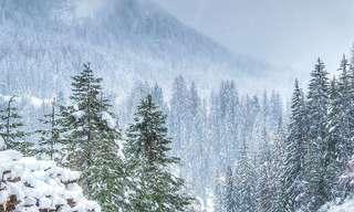 תמונות מרהיבות של שלג מכסה את הטבע
