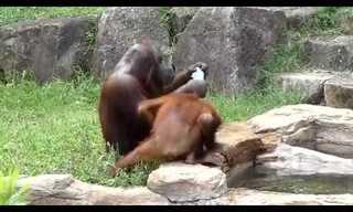 התנהגות אנושית של בעלי חיים