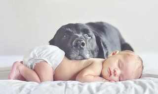 תינוקות וכלבים גדולים - חברות מרגשת!