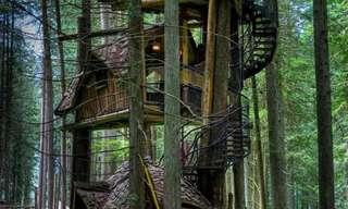 בתי עץ מדהימים היישר מחלומות הילדות